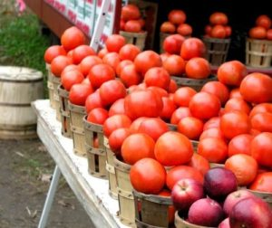 Tomatoes at Roadside Stand