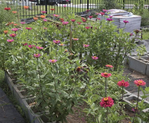 Fall Plant Sale Hosted By USC Upstate Community Garden Group
