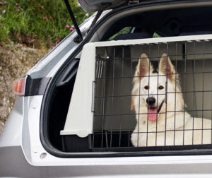 blog_apcc-alert_car-tips-pet-passengers_080816_main